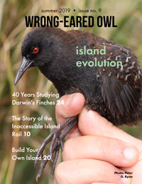 Wrong-eared Owl cover