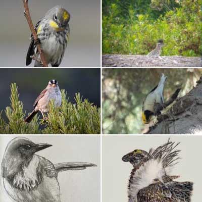student bird photos